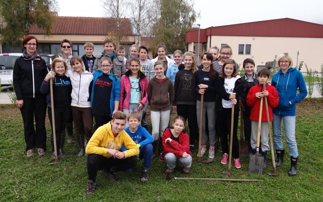 Sajenje dreves okoli šole